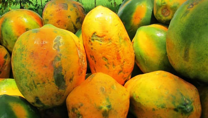 Picture of a bunch of papayas