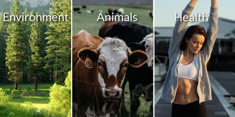 The 3 reasons to go vegan